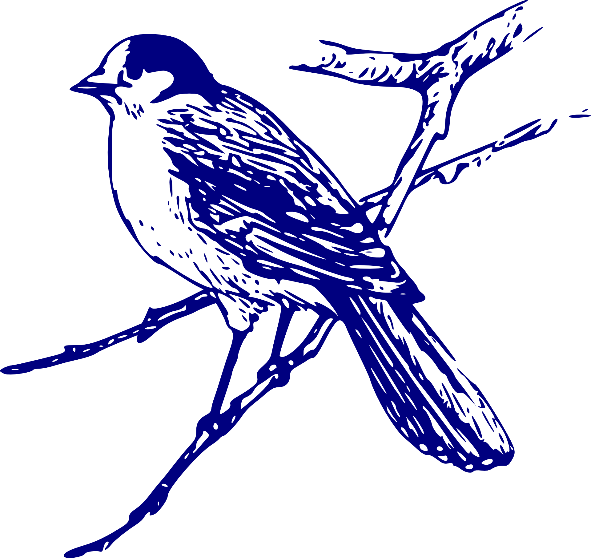 Image Result For Bluebird Coloring Page