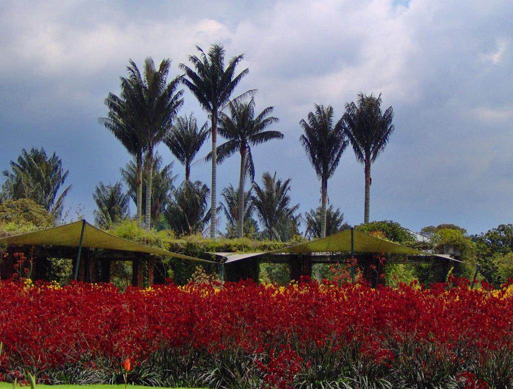 Bogot botanical garden wikipedia for Landscape gardeners