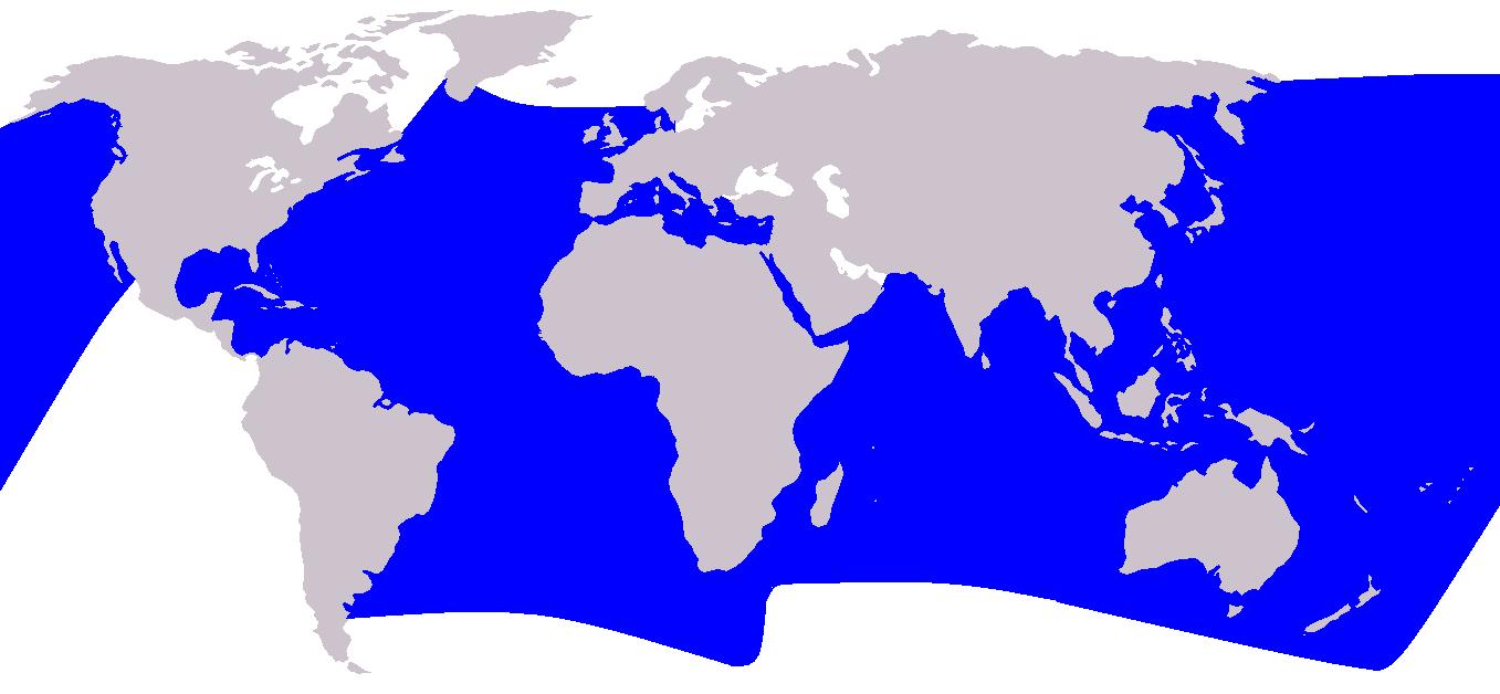 Cetacea Verbreitung Blau-Weißer Delfin - Stenella coeruleoalba streifendelfin Vorkommen Lebensraum