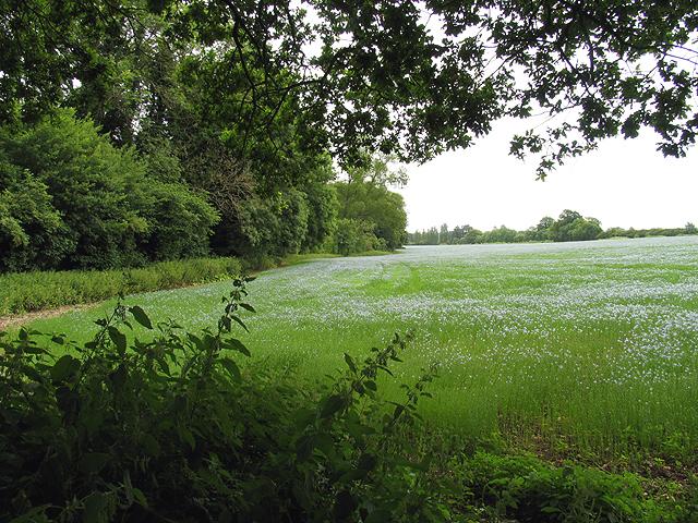 Archivo: tierras de cultivo cerca de Burghfield - geograph.org.uk - 22989.jpg