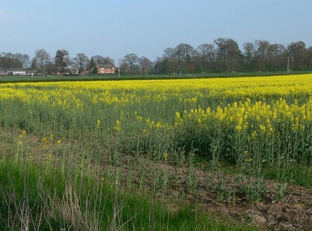 Farmland near Wistow - geograph.org.uk - 401187