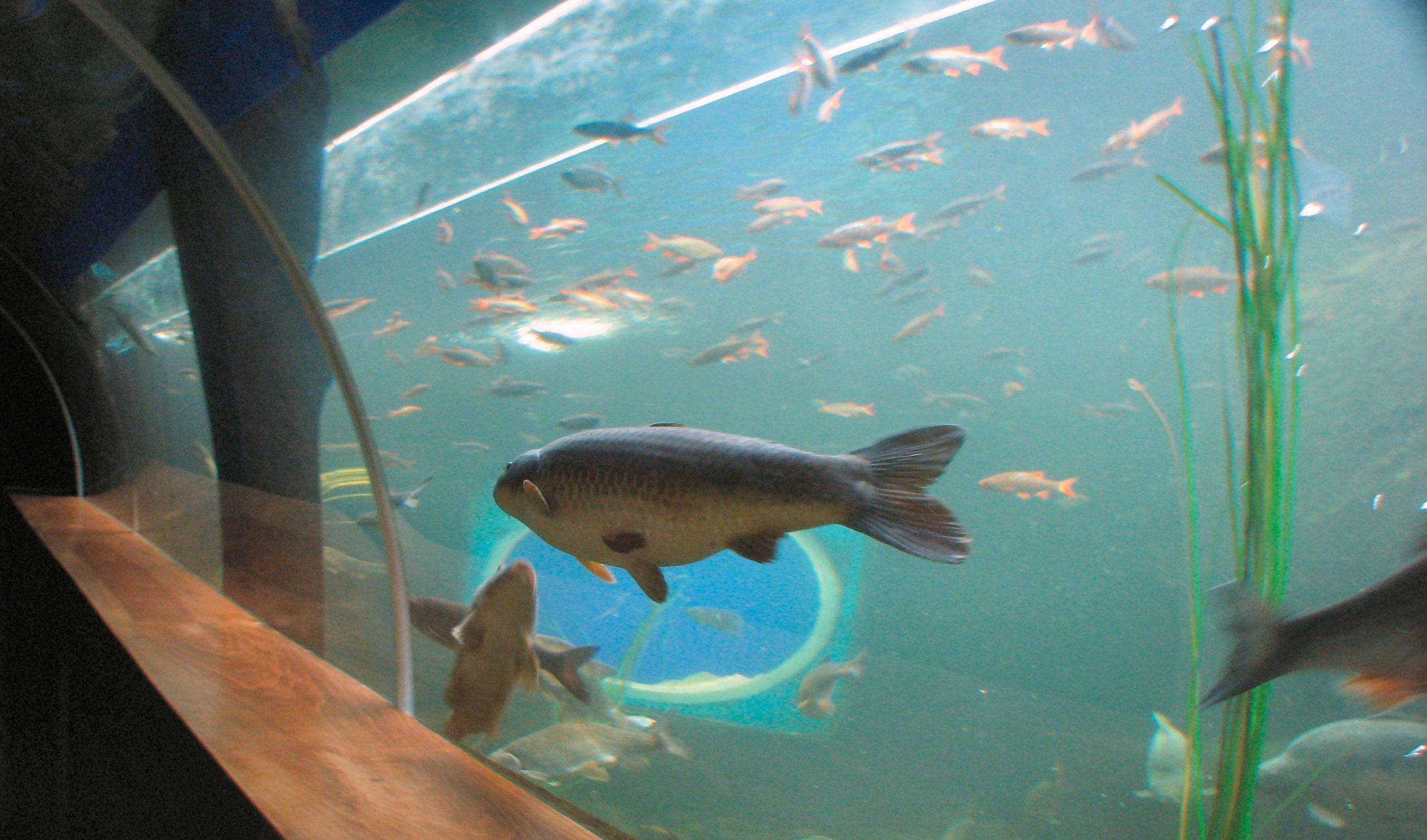 File:Fish at Lakes Aquarium Cumbria.jpg - Wikipedia, the free ...