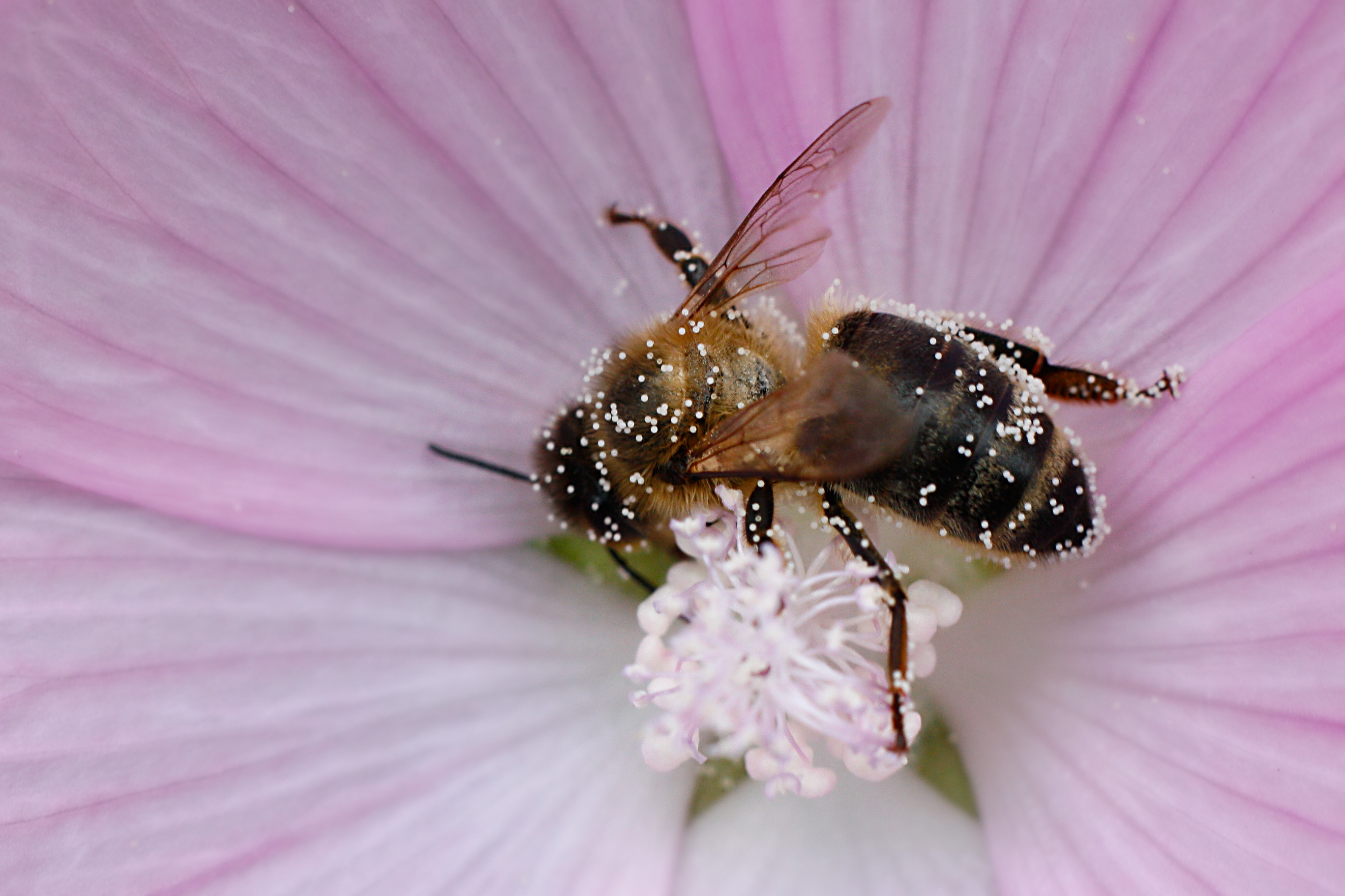 Image Result For Bee With Flower