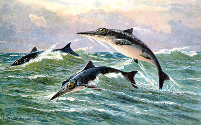 http://upload.wikimedia.org/wikipedia/commons/b/b3/Ichthyosaur_hharder.png