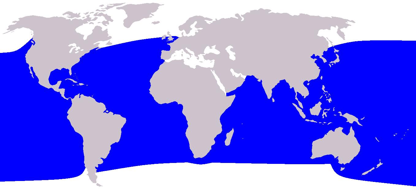 Zwergpottwal - Kogia breviceps Verbreitung Vorkommen Lebensraum Karte