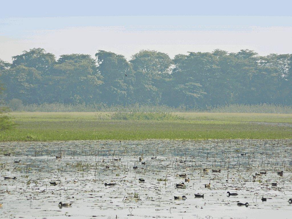 Nawabganj Bird Sanctuary Review File:nawabganj Bird Sanctuary