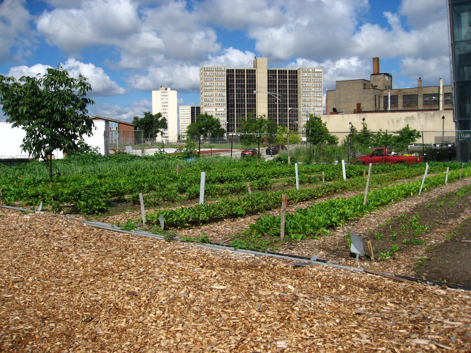 North view of a Chicago urban garden.jpg