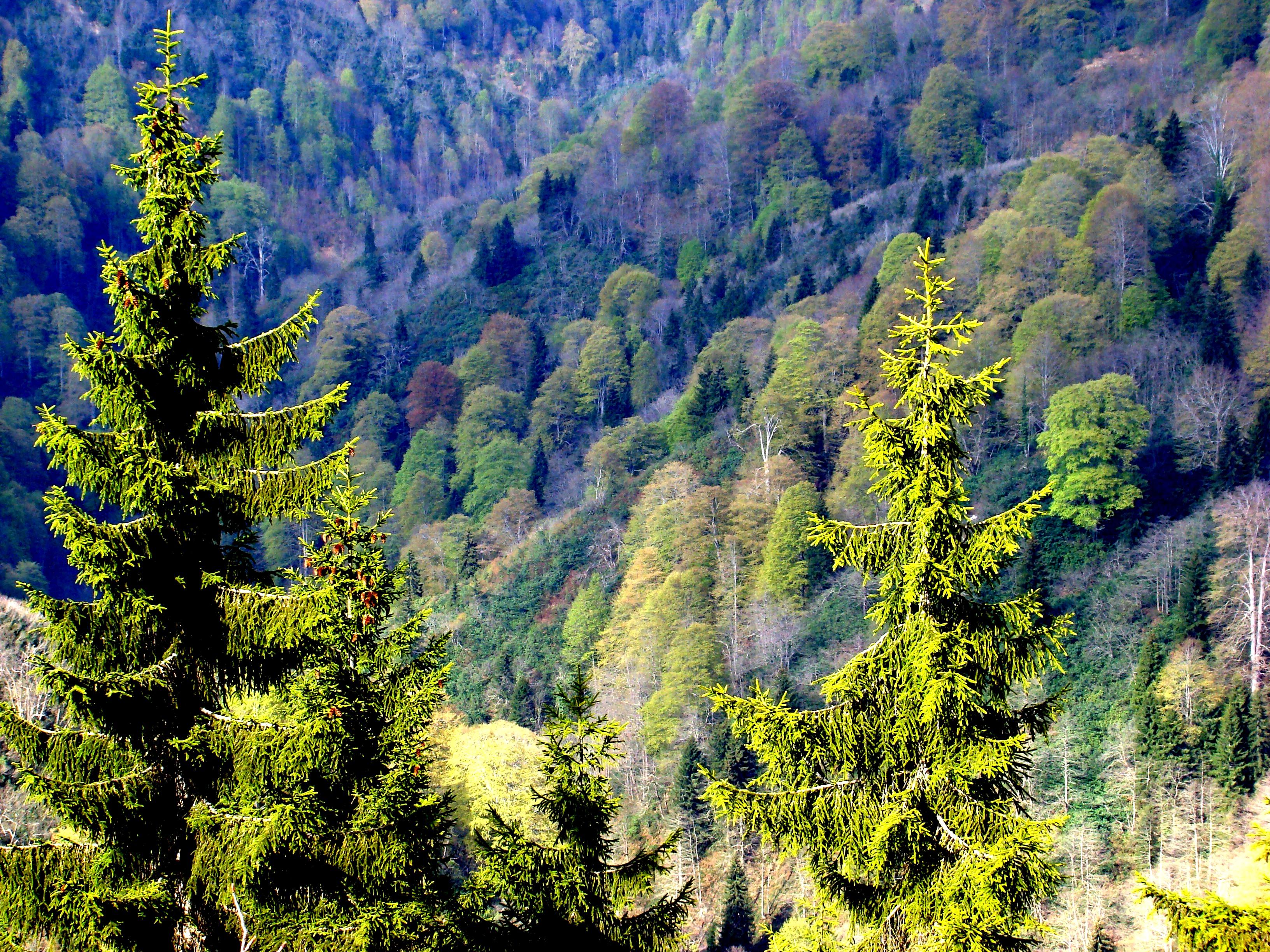 Dosya:Orman.JPG - Vikipedi