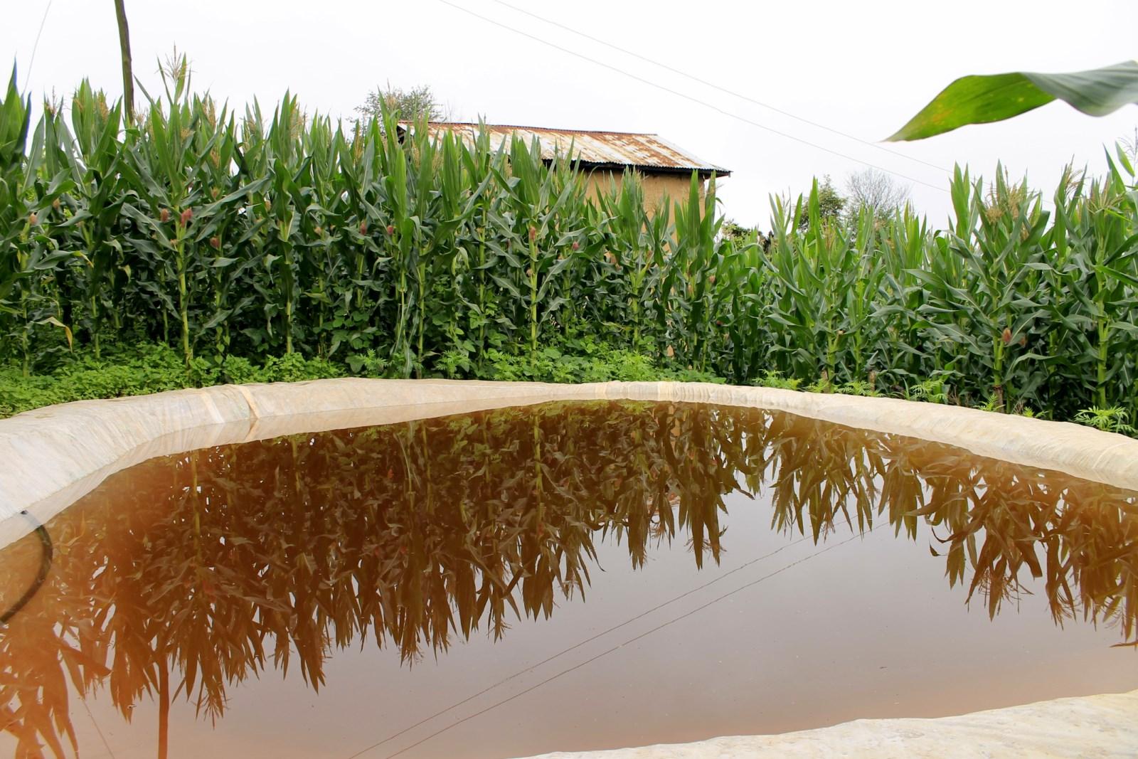 Description rainwater harvesting system jpg - File Rainwater Harvesting And Plastic Pond 3 Jpg