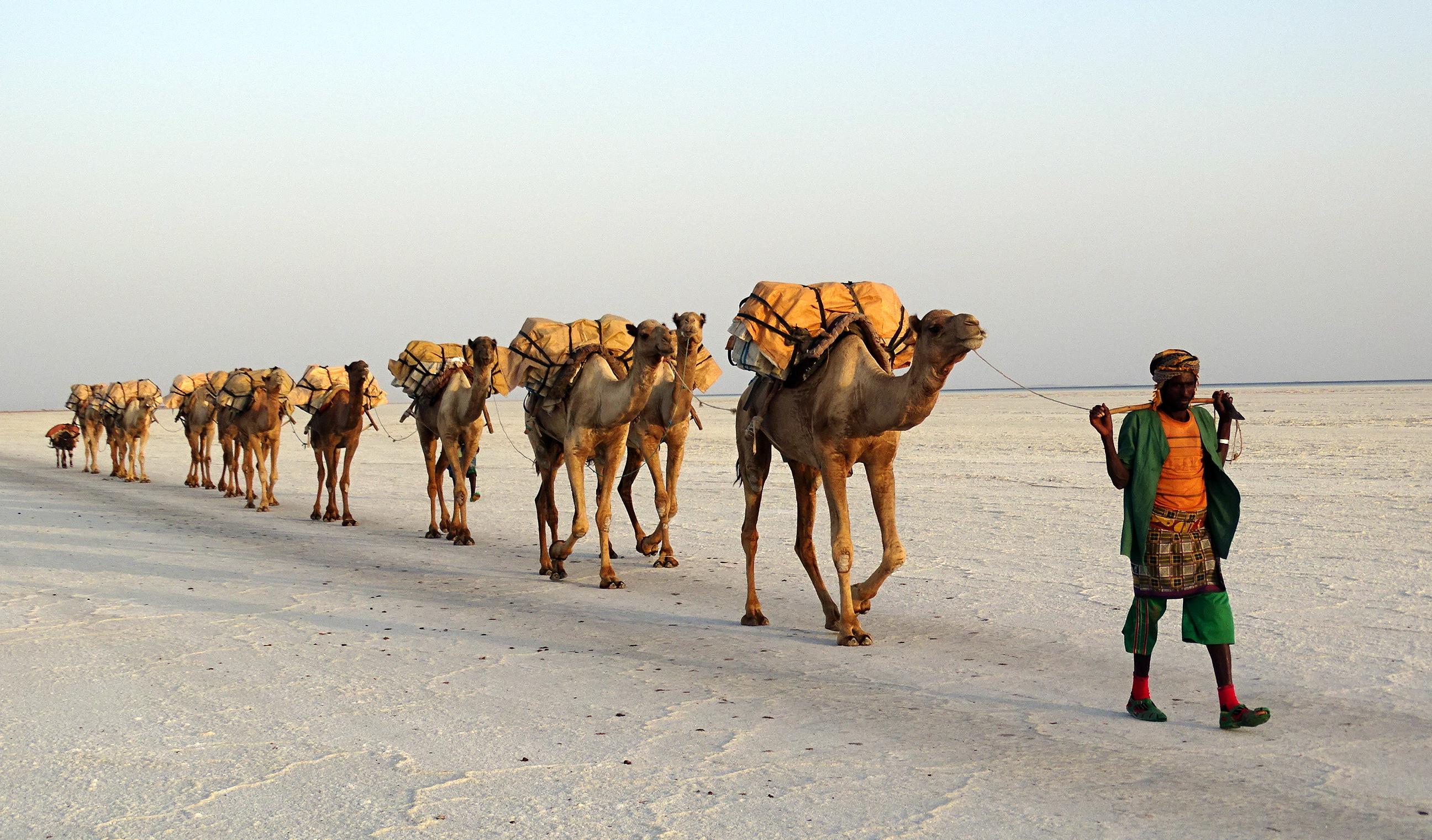 Camel Train Wikipedia