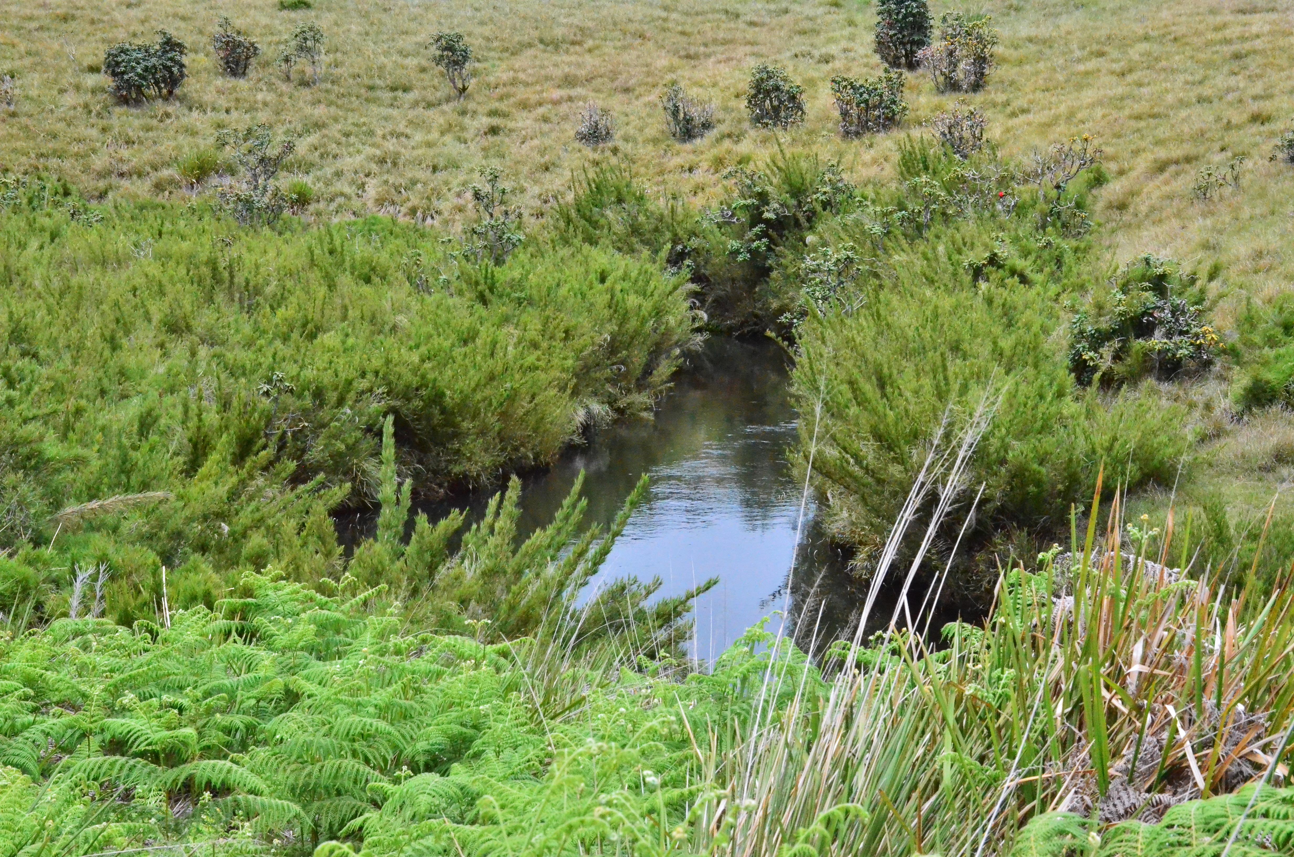 Small_creek_at_Horton_Plains_by_Prarthana_Mahipala.jpg