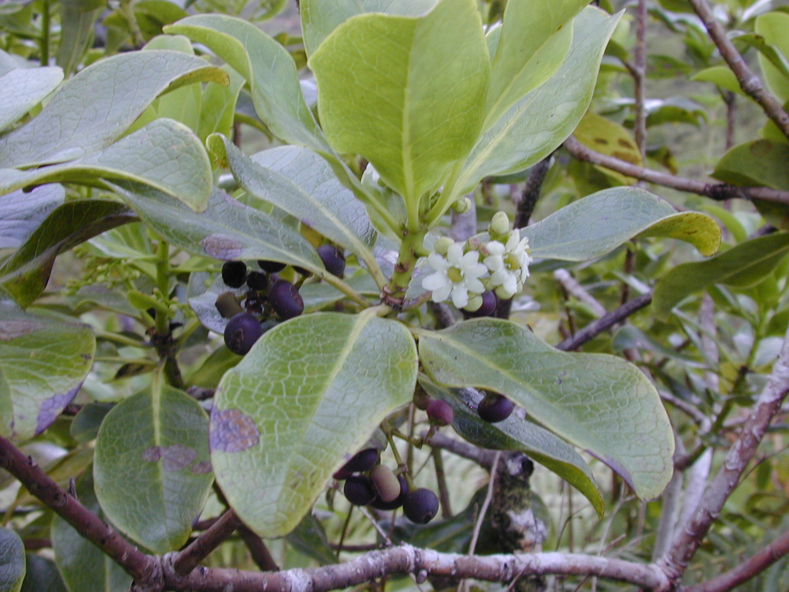 Flowering Plant Identification