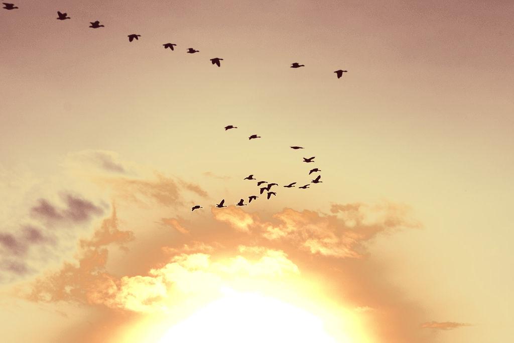 File Sunset Birds Holland