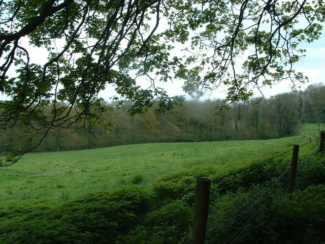 File:Temple Wood near Selborne - geograph.org.uk - 163823.jpg
