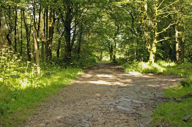 Tracks meet in Tockholes Plantation - geograph.org.uk - 505904