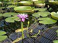 Unidentified plantKew14.jpg