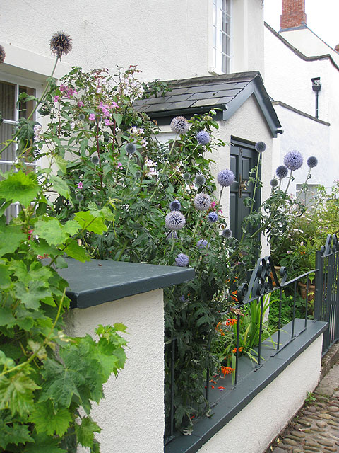 File A Small Front Garden In Usk Geograph Org Uk