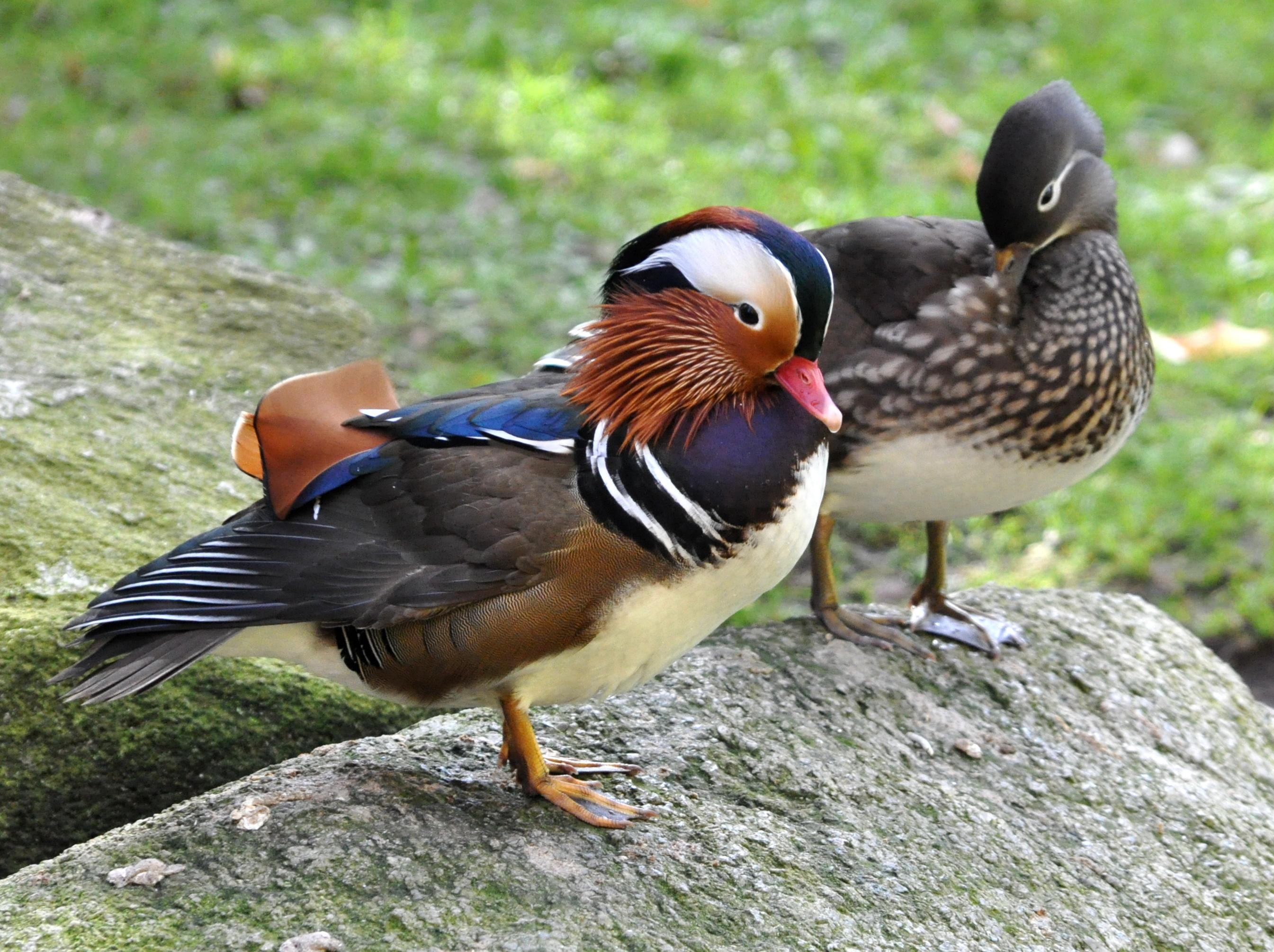 A veces un pato es solo un pato - 3 6