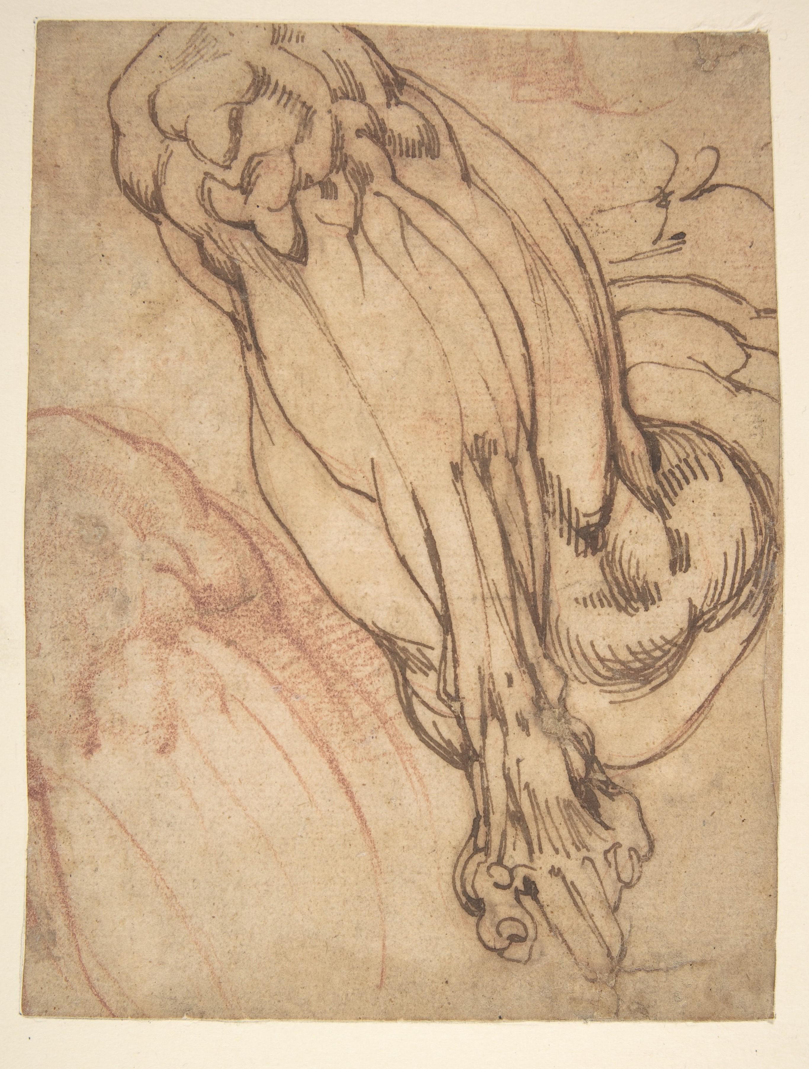 File:Anatomical Studies of a Leg (recto); Study of a Leg (verso) MET ...