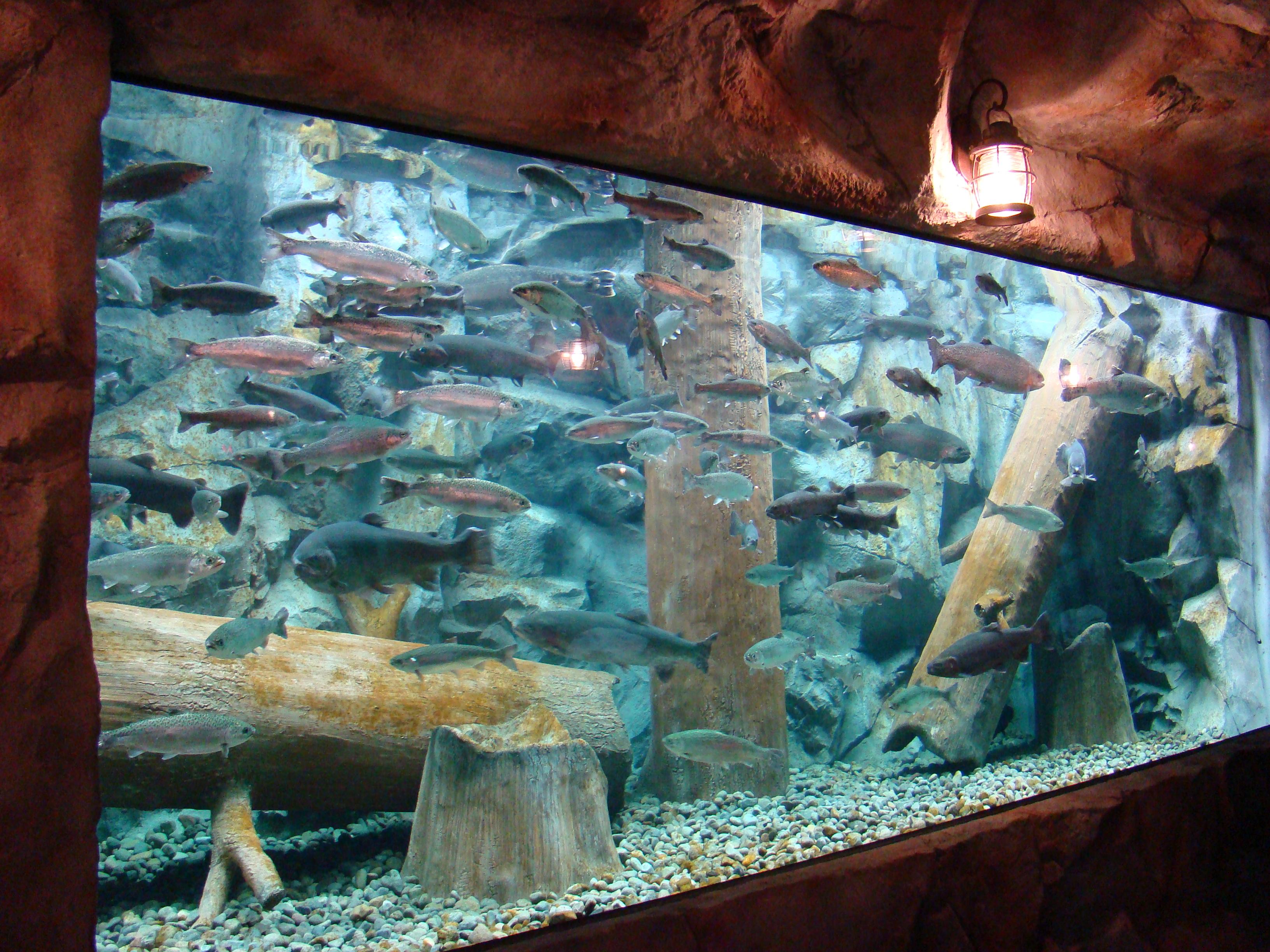 Image Result For Aquarium Fish Stores