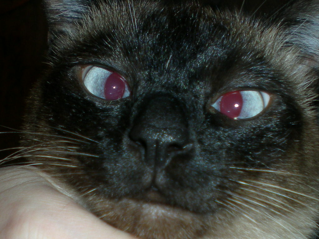 My Cats Eye Is Swollen And Pusy