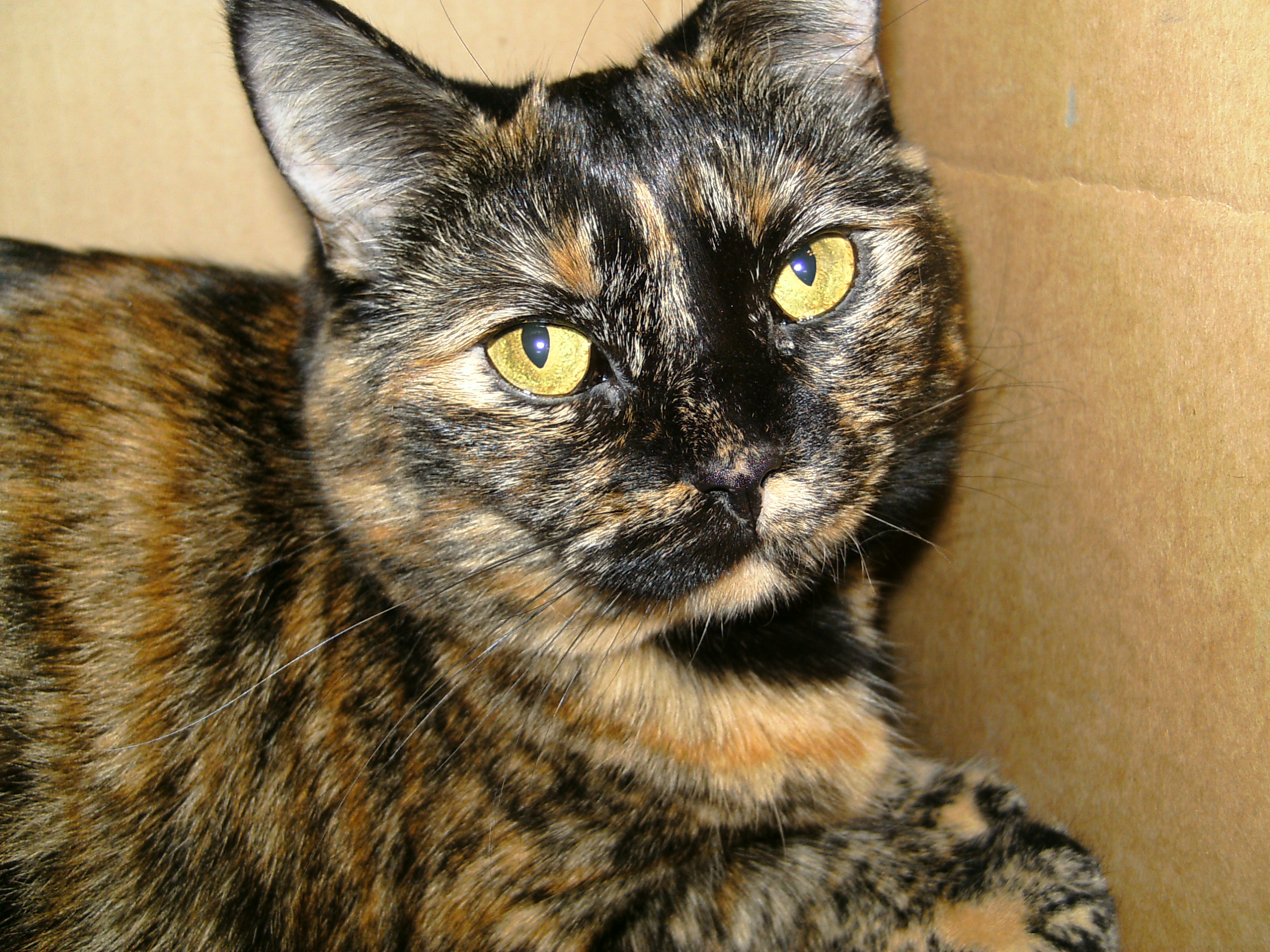 125 Most Asked Questions About Cats | Library of Cats