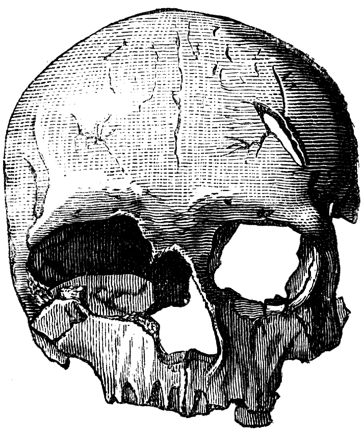 File:Cro-Magnon-female Skull.png