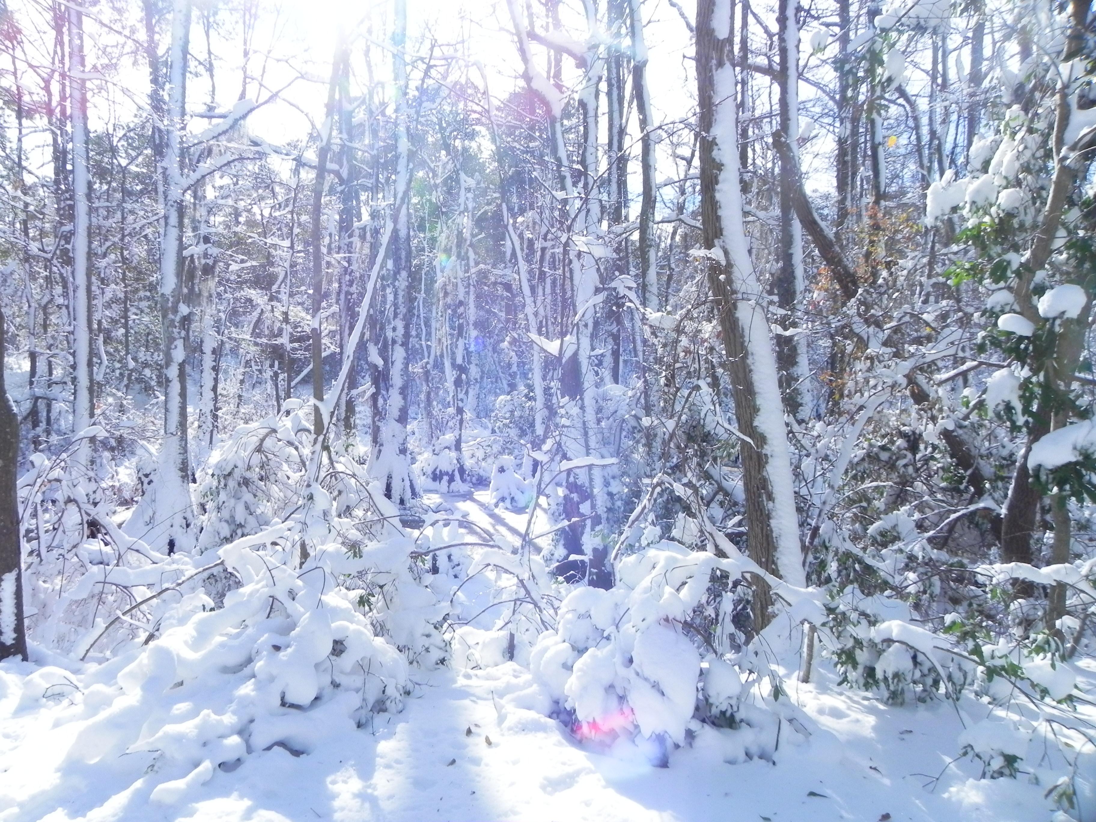 File:FL Winter Wonderland (5303509083).jpg - Wikimedia Commons