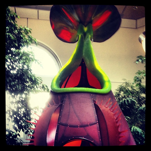 Gigantic and fanciful purple pitcher plant