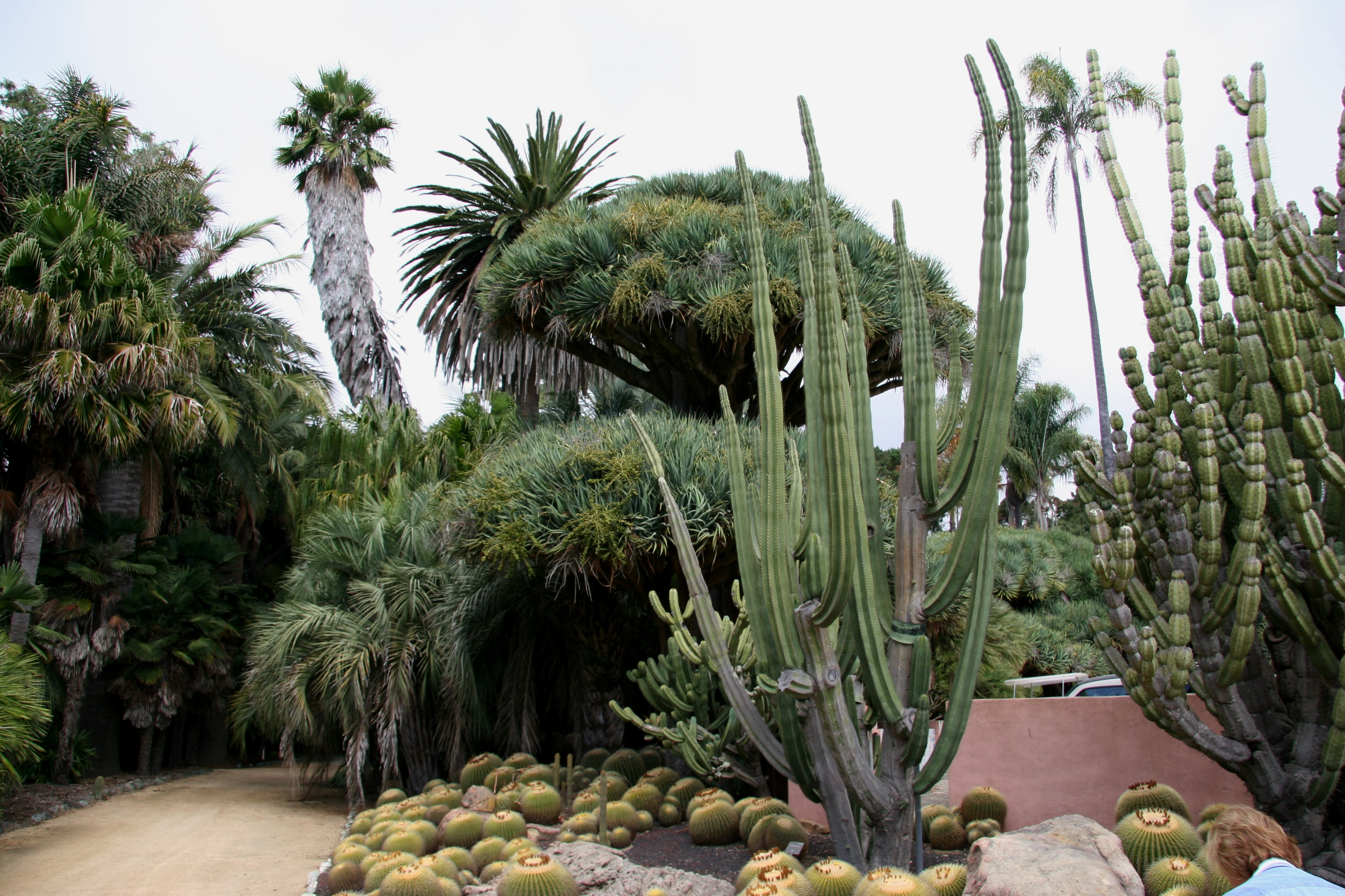 File Flickr Brewbooks Cacti And Euphorbia Garden