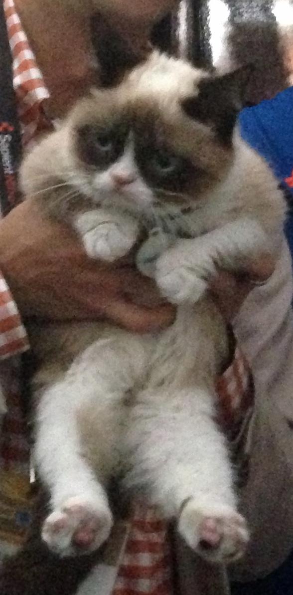 Original Grumpy Cat Meme