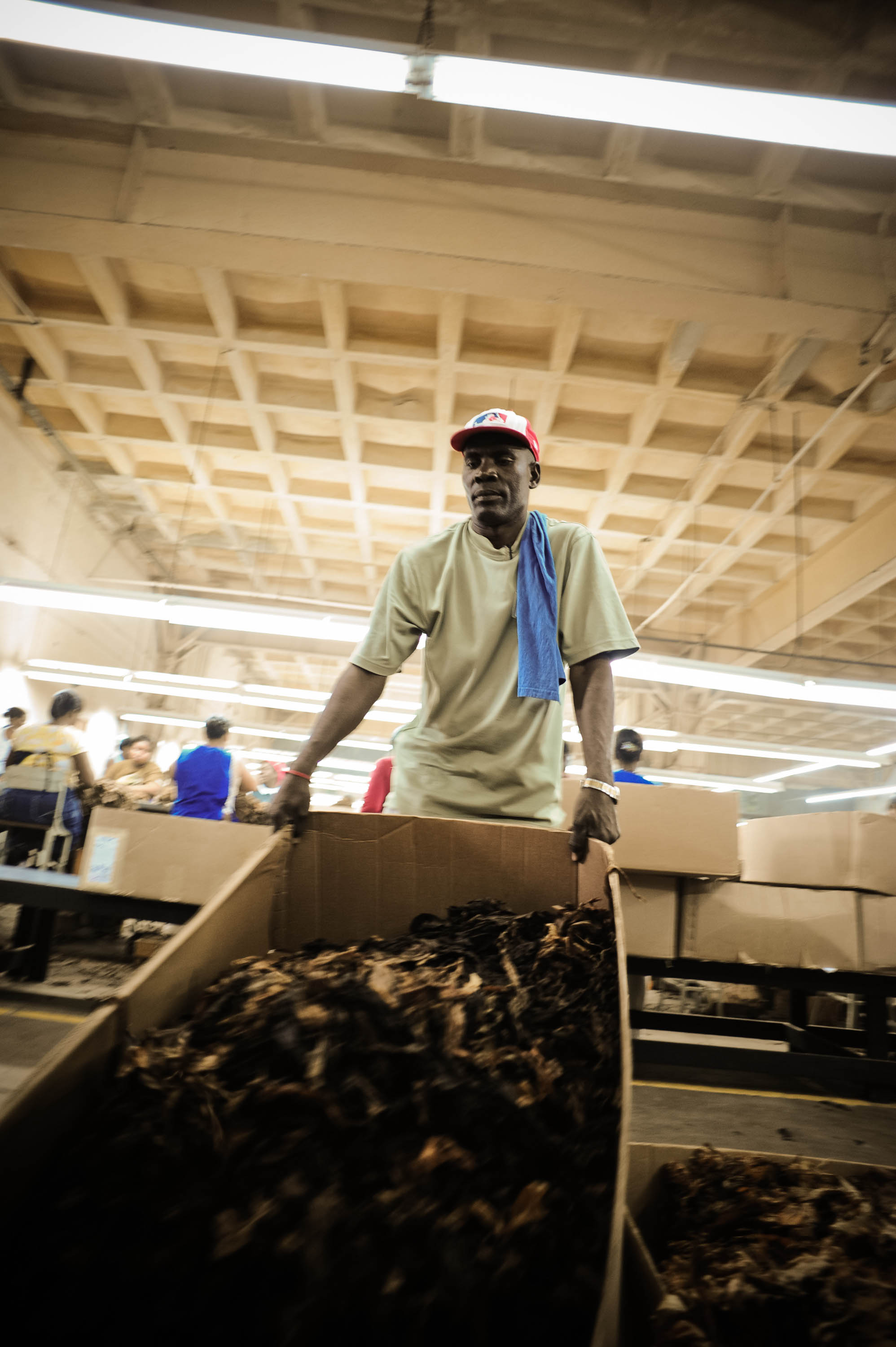 File:Handmade cigar production, process  Manufacture worker