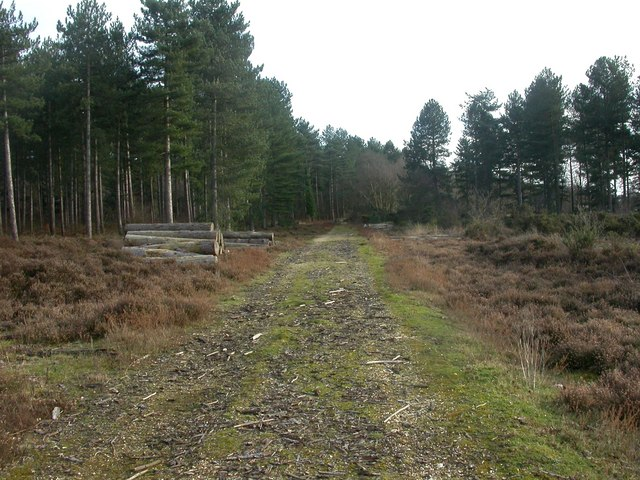 Hurn, forestry track - geograph.org.uk - 1183576