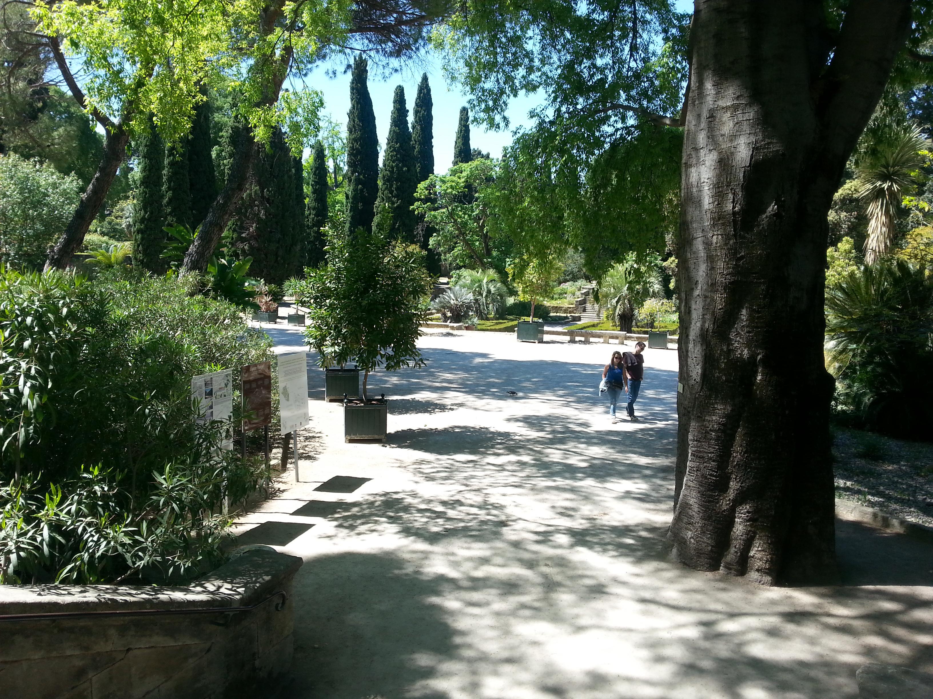 File Jardin des plantes de Montpellier Wikimedia mons