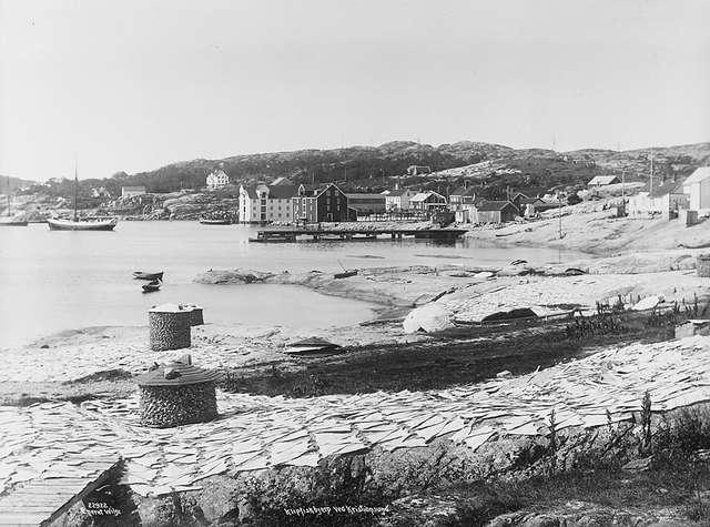 File:Klippfisktørking, Kristiansund, 11. august 1922, Anders Beer Wilse, NF.W 22922.jpg