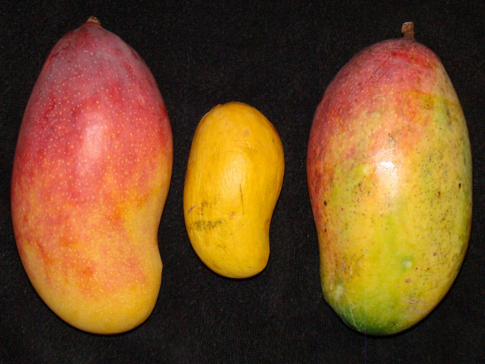 Image result for images of long mangoes