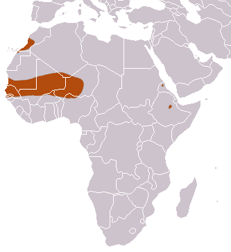 The average adult weight of a Mauritanian shrew is 2 grams (0 lbs)