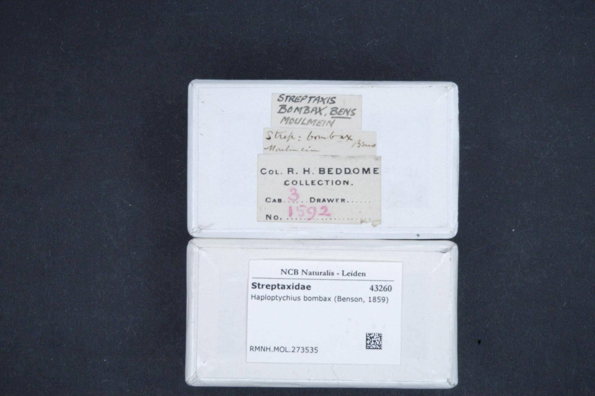 File:Naturalis Biodiversity Center - RMNH MOL 273535 1
