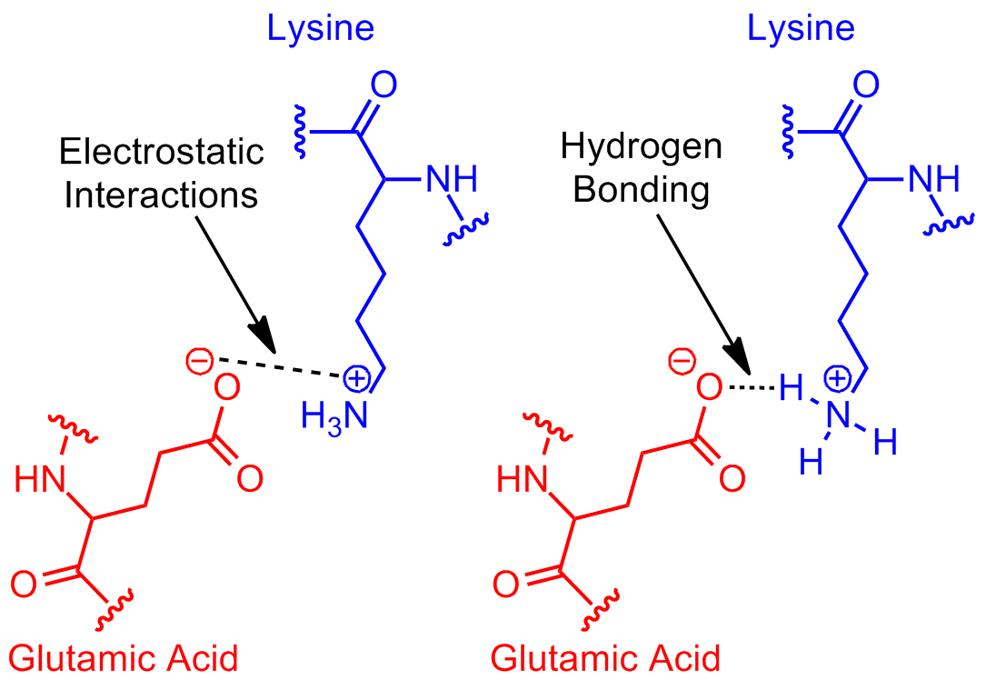 File:Next Revisit Glutamic Acid Lysine salt bridge.png - Wikipedia ...