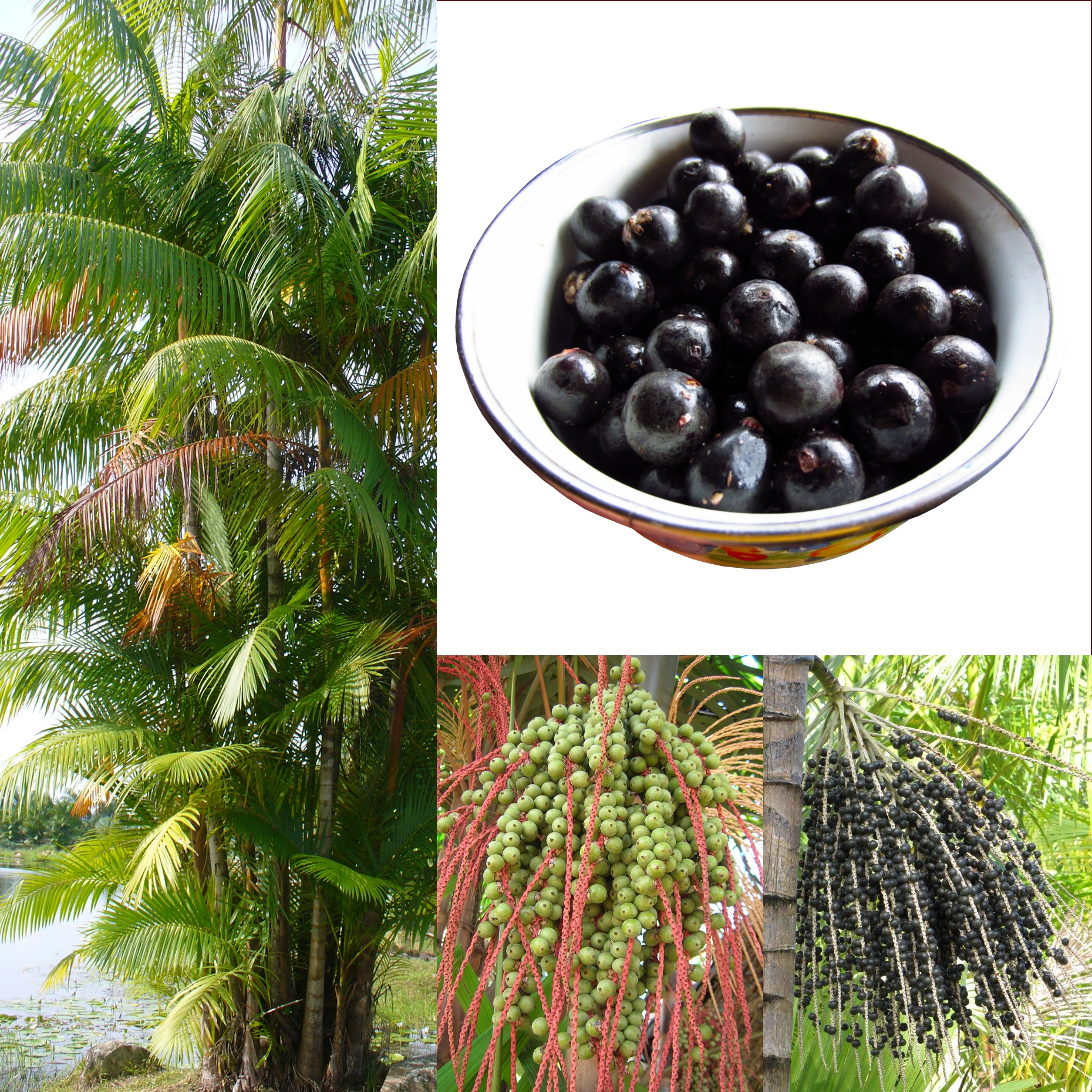 Image result for acai