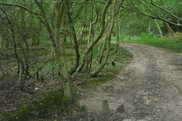 Part of Sulham Woods - geograph.org.uk - 915908