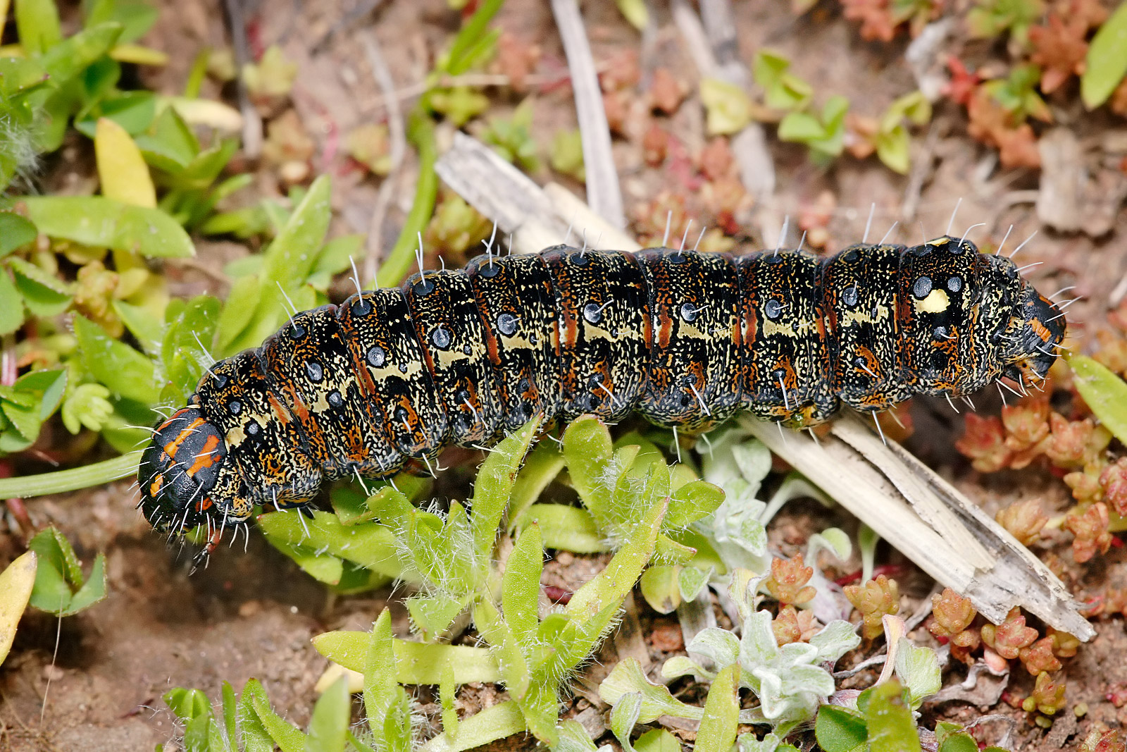 What Do Caterpillars Like To Eat And Drink