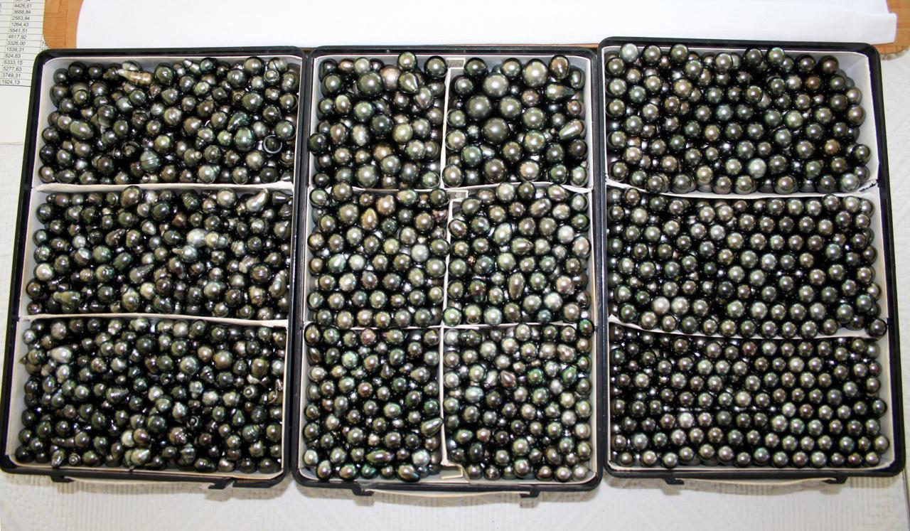 9176b798d Tahitian pearl - Wikipedia