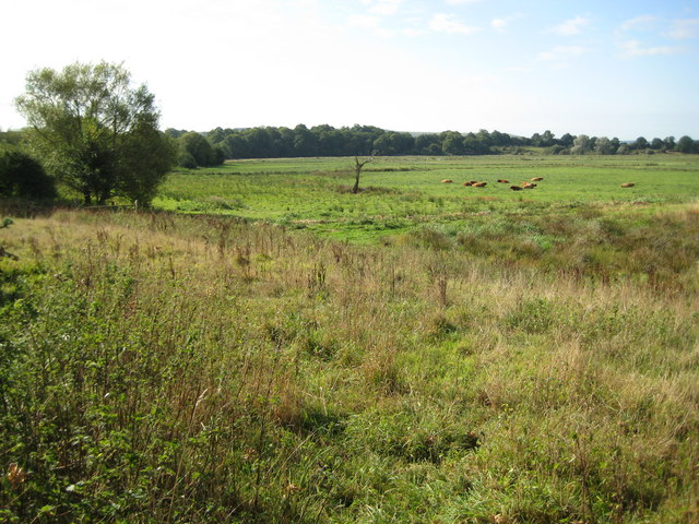Pulborough Brooks RSPB site and flood meadow - geograph.org.uk - 1507142