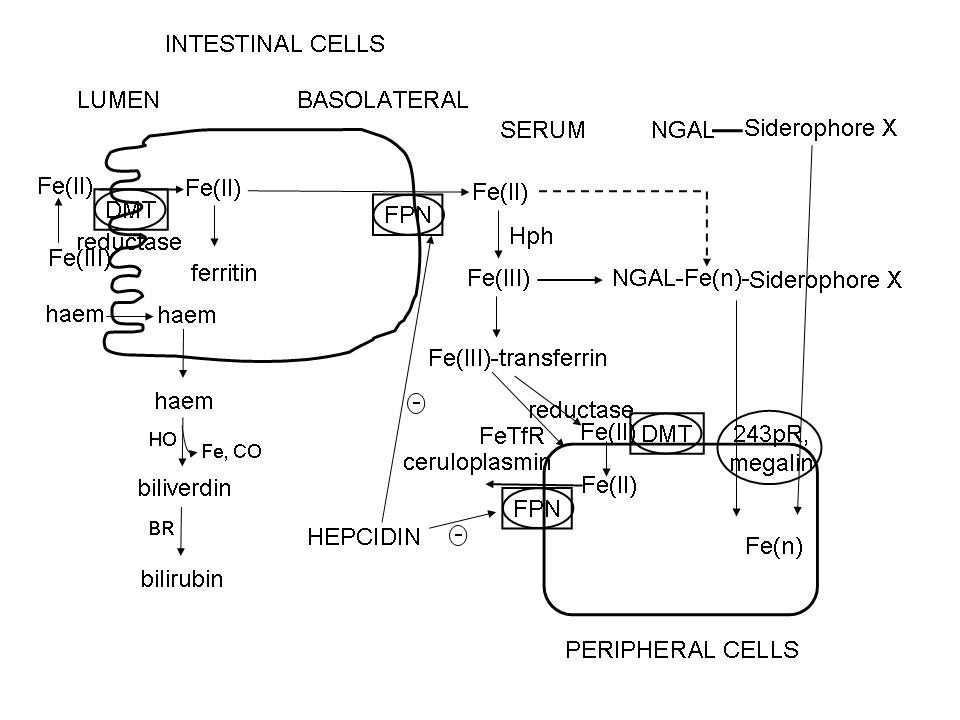 File:Schematic overview of the main elements considered to ... on google open, how open bottle wine, computer open, how open iphone 4, books open,
