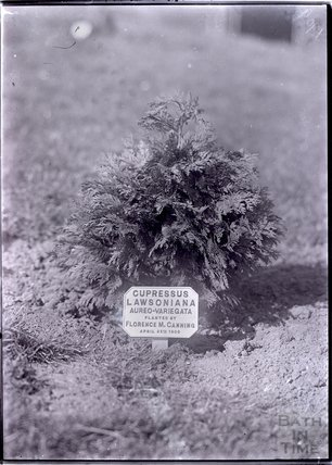Tree planted by Florence Canning