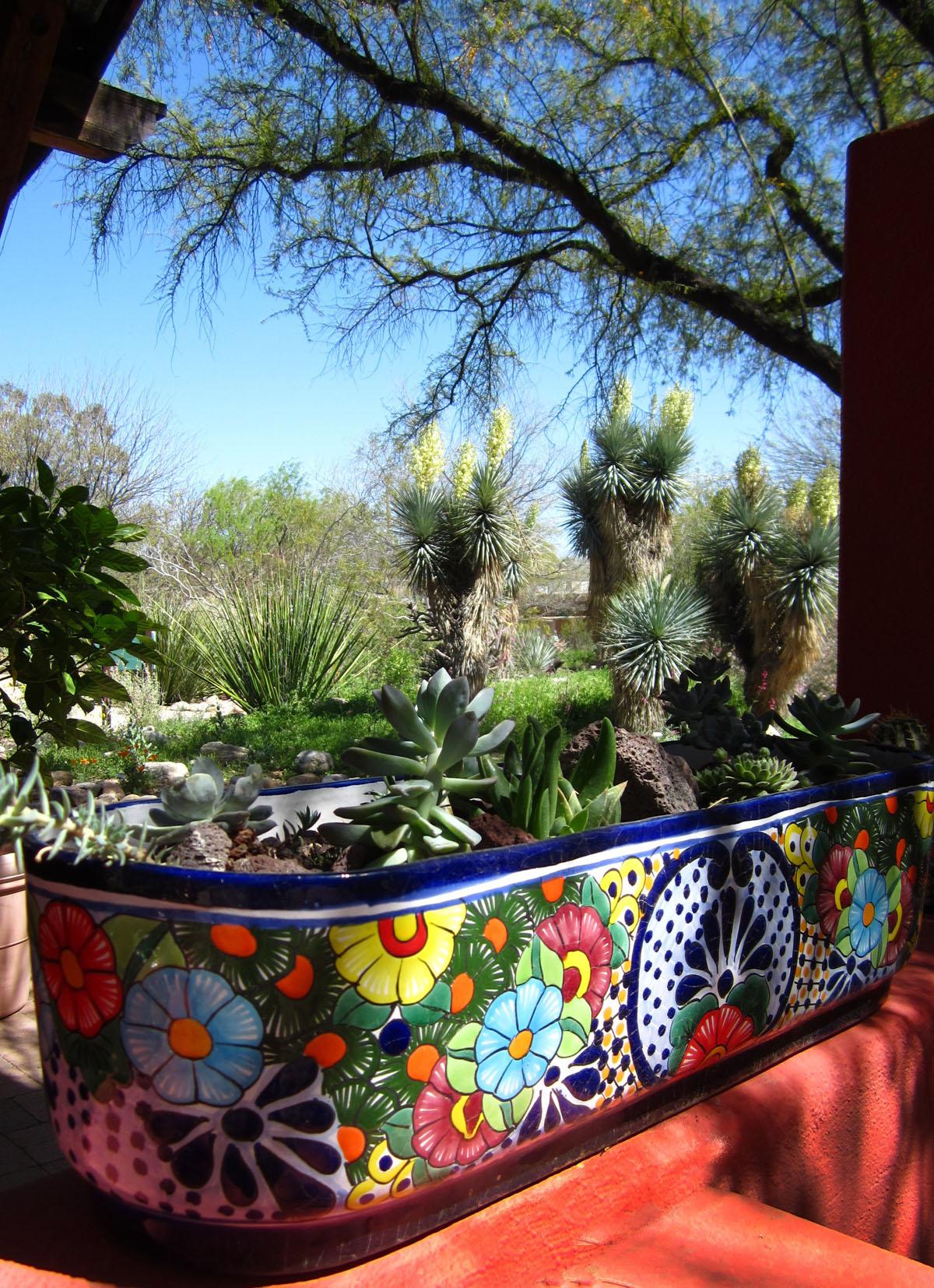 tucson botanical gardens - wikipedia