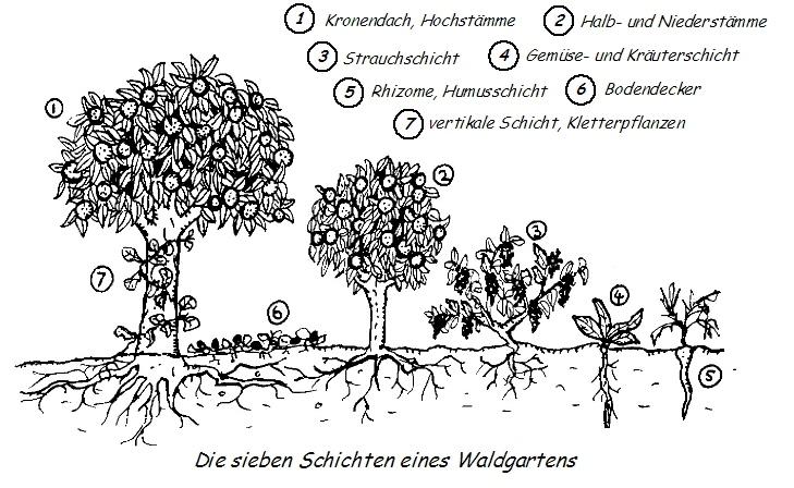 Datei:Waldgartenprinzip.jpg
