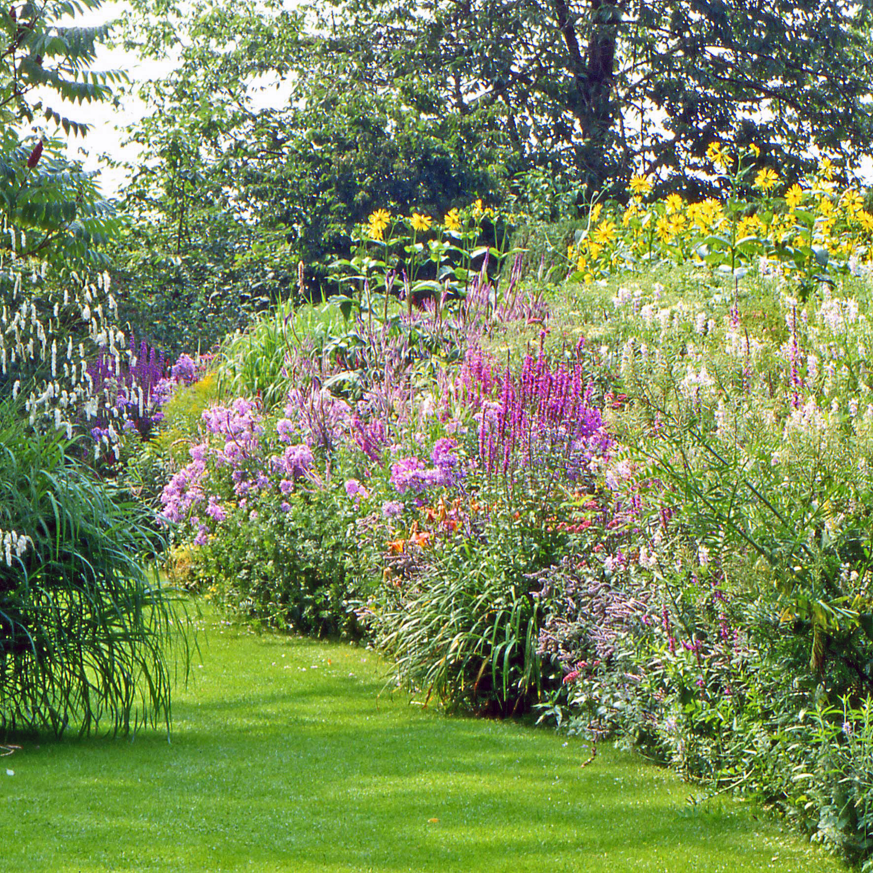 File zonneborder detail jpg wikimedia commons - Voorbeeld van tuin ...