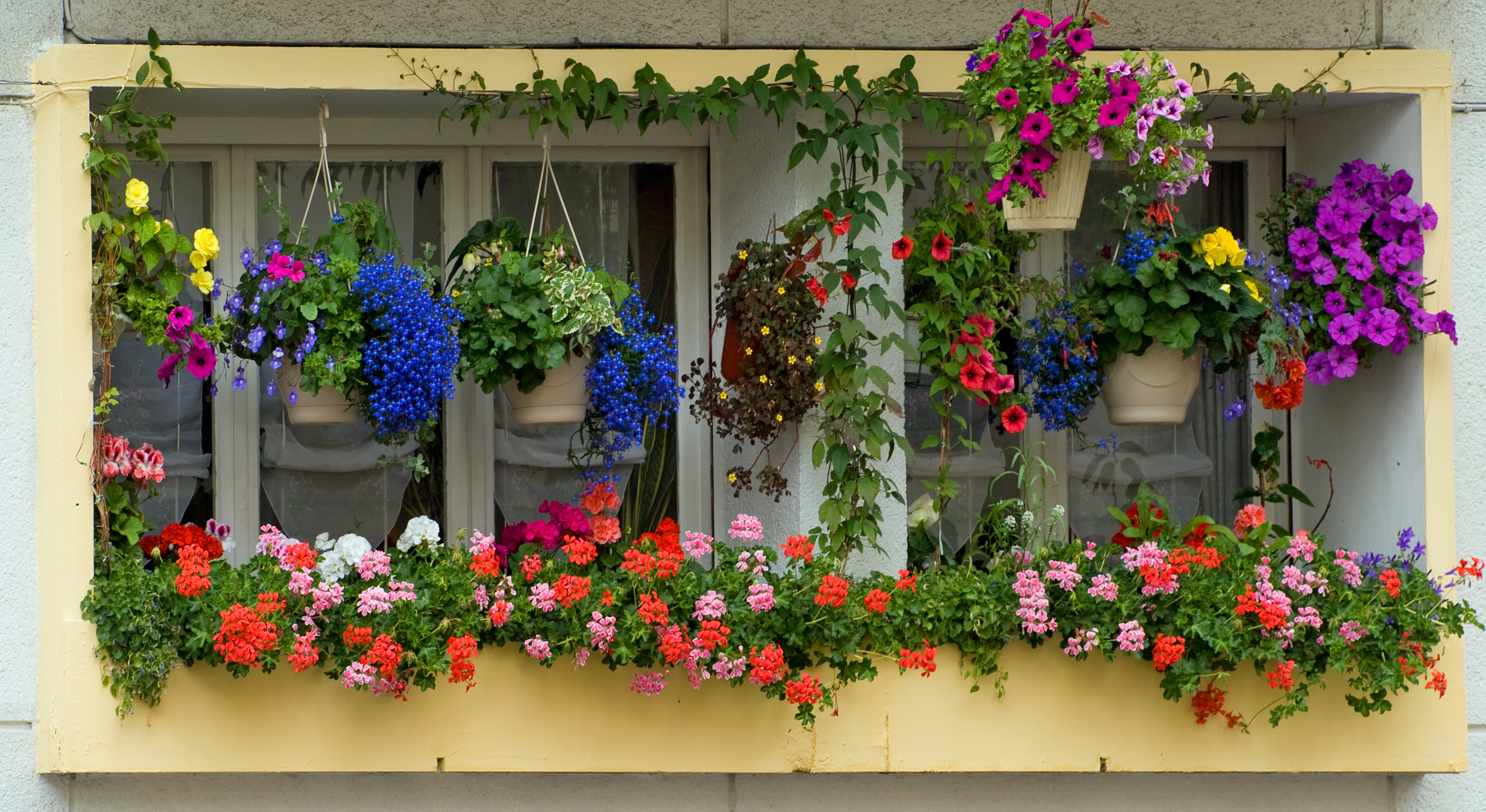 Flowers For Hanging Baskets In Part Shade : File windowboxes arras france g